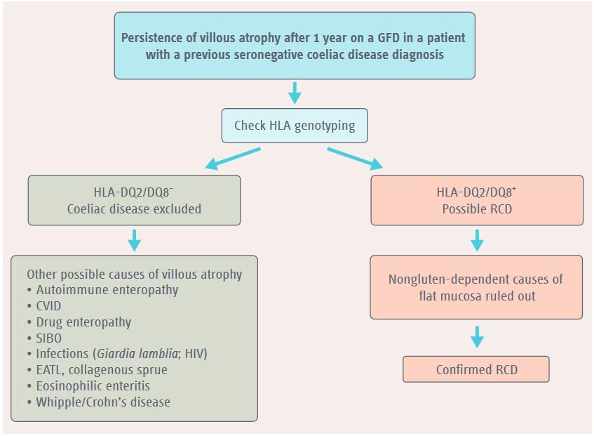 Giardia poop in babies - Can giardia cause celiac disease